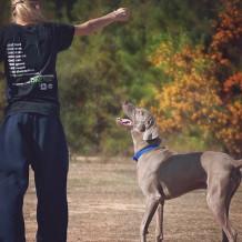3 sports à pratiquer avec son chien